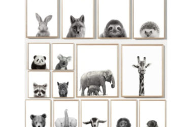 Set of 3 Animal Pictures Only $12.77 (Reg. $54)!